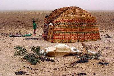 A high rate of livestock deaths is reported in the Ogaden region due to drought and other factors (file photo).