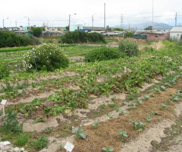 Urban Food Gardens Take Off