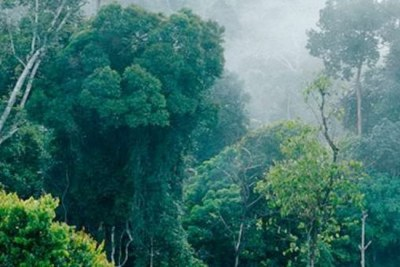 Ethiopia forestry.