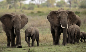 Zimbabwe's Minister Moyo Implicated in Elephant Hunting Saga