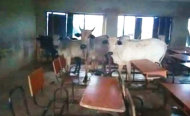 Why Are Cows MOOOving to Schools in Nigeria?