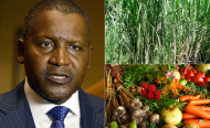 Nigeria's Dangote Banks on Agriculture to Blow Up