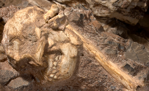 Researchers Reveal South Africa's Oldest Fossil of Human Ancestor