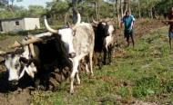 Namibian Farmers Stop Ploughing Due to Lack of Rains