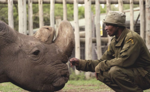 World's Last White Male Northern Rhino Dies in Kenya