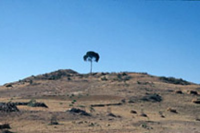 Déforestation à Asmara en Ethiopie