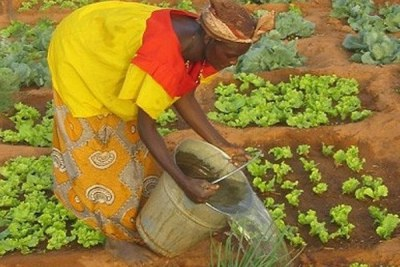 Sahel farmers are finding ways to reclaim the desert.