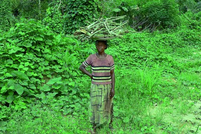 Africa's Tropical Forest Management