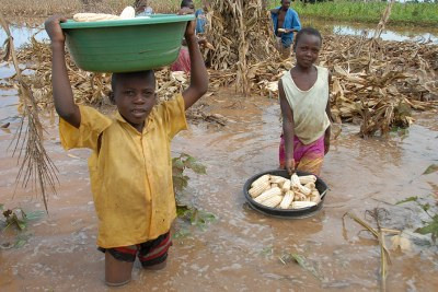 Children recover maize from a flooded field in Uganda. Climate change threatens regional development in Africa.