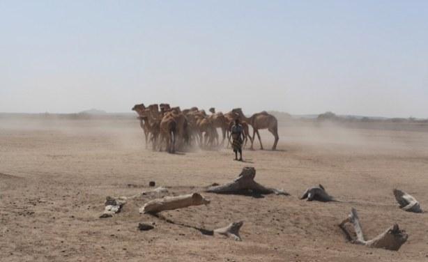 Will Oil Benefit Ethiopia's Somali Region? - allAfrica com
