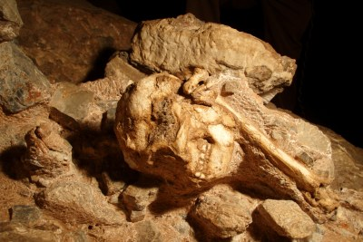 The  hominid fossil, Little Foot, in the cave at Sterkfontein in which it was found.