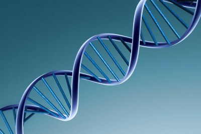 DNA, or deoxyribonucleic acid, is the hereditary material in humans and almost all other organisms.