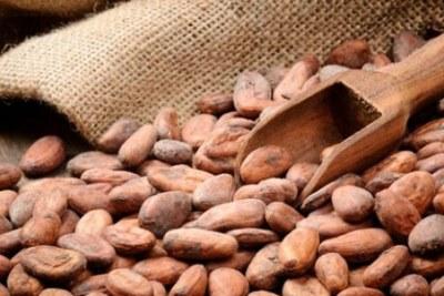 Fraude sur l'exportation du Cacao : La Côte d'Ivoire perd 2500 milliards Fcfa en 24 ans