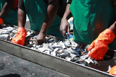 Preparing fish to be tinned (file photo).