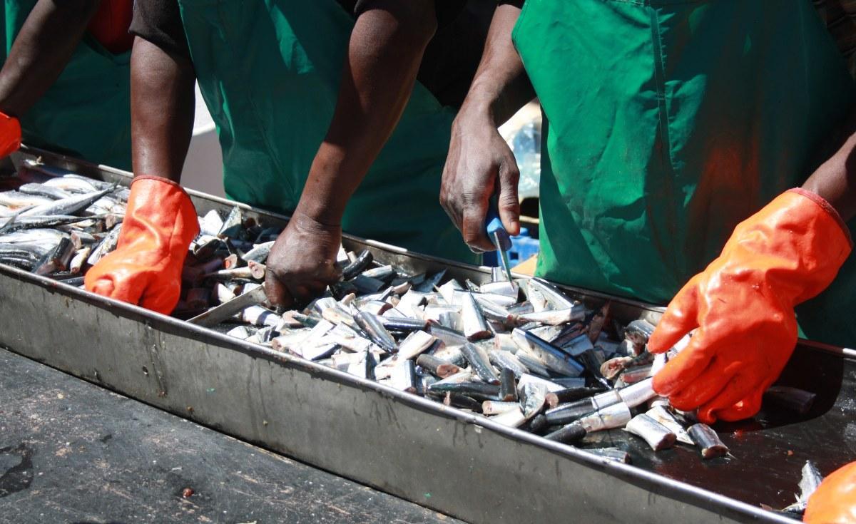 Namibia: Presidential Families Feast On Tunacor