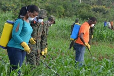 The provincial Governor Judith Kazayire and army officers help farmers to spray pesticides on over 600Hectares of maize in Nasho in Kirehe District.