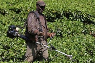 Tea farmer James Maina in Kamunyaka, Nyeri (file photo).