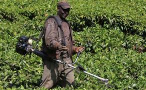 Outrage Over Kenya's Bid to Ban Use of Raw Animal Manure