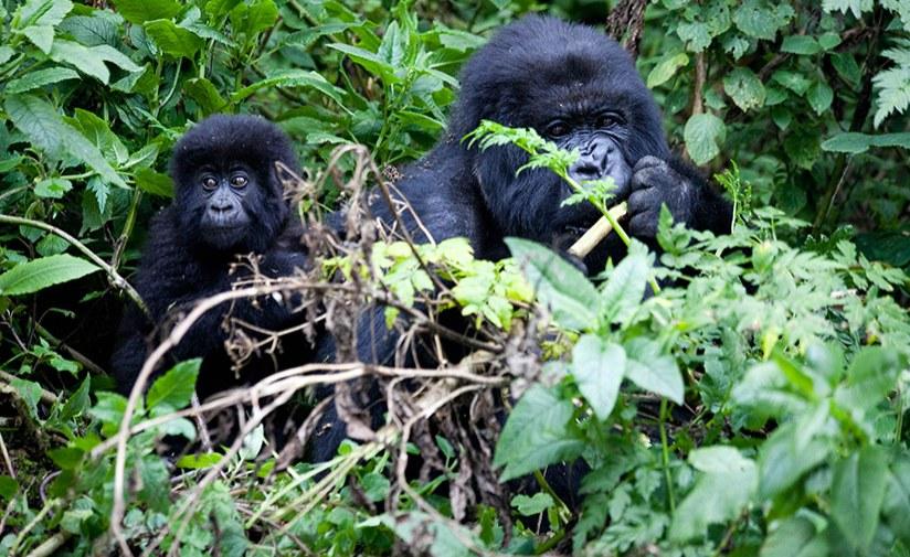Uganda Tops CNN's List of Beautiful Places Worldwide