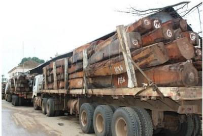 Exploitation illégale d'arbres à Cuando Cubango