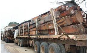 Des Chinois arrêtés pour exploitation illégale de bois en Angola