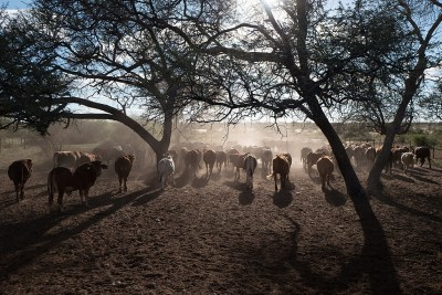A typical cattle farm near Gobabis.