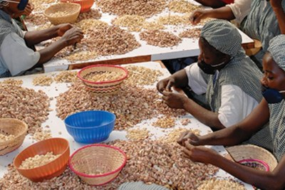 Tanzania is prepared to start processing 5,000 tonnes of cashew nuts per year at the Chinese Sunshine industry