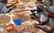 China Plans for World to Go Nuts for Tanzania's Cashews!