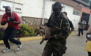 Kenyan Officials Seize Live Tortoise, Dog Meat in Nairobi Raid