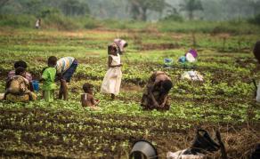 En 2019, la FAO a besoin de 940 millions de dollars pour sauver des vies