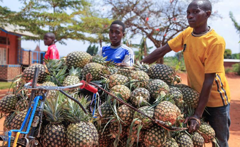 Africa: To Keep African Youth Agri-Businesses Relevant - Align Investments with Future Agricultural Trends