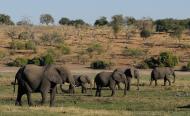 Botswana May Lift Ban on Hunting Elephants & Other Big Game