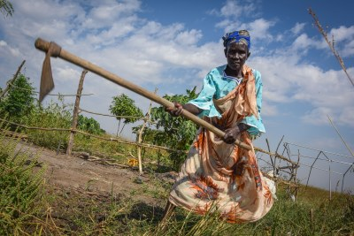 """File photo: Duom Deng Biar is part of a farmers group in Twic East in Jonglei, South Sudan, where a poor harvest has led to widespread hunger. """"If I feel hungry, it is okay, but the children should not,"""" said Duom. """"We are feeling hungry. What we have cultivated, we have finished,"""" she said. The family tried to get a second harvest, but the lack of rain meant that the seeds dried off. """"I have a lot of challenges. One son is still in school, and I have to sell our chickens, so that I can pay the school fees,"""" she said."""