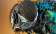 Insect Declines Are a Stark Warning to Humanity