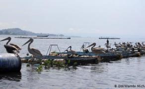 Will Cage Farming Protect Lake Victoria's Fish?