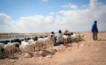 Une sécheresse cause une crise de la faim pour 2 millions de Somaliens