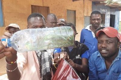 Les habitants de la région d'Isiolo, au nord de Nairobi brandissent une bouteille remplie de criquets envahisseurs.