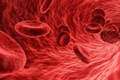 Red blood cells (file photo).