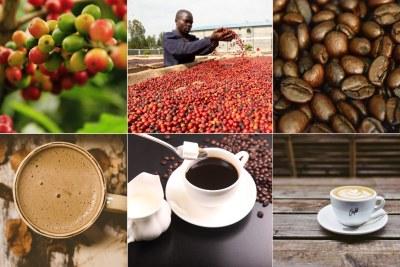 Ugandan coffee reaches record high sales (file photo)