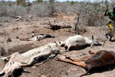 Taaabu Kahindo Gogo from Dingiria village in Ganze, Kilifi County lost 20 cows to drought in September 2021.