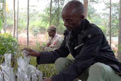 FAO food hero Bogale Borena is aiming to cultivate 100,000 avocado seedlings a year.